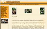 Magyar NetGombász Közhasznú Egyesület honlapja